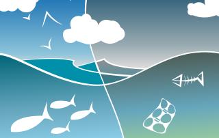 ecosistema aquàtic